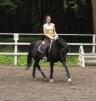 Аренда лошади (верховая езда) Чехов Крытый манеж маленькая