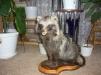 Чучело Енотовидной Собаки маленькая