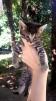 Чудесные котята в добрые руки маленькая