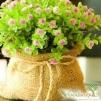 Декоративные растения из европейских питомников маленькая