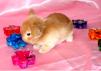 Декоративные кролики маленькая