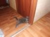 Ищу кота для вязки маленькая