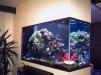 Изготовление и обслуживание аквариумов маленькая