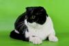 Кот для вязки маленькая