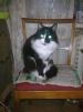 Кот Том маленькая