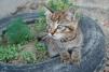 Котенок в добрые руки маленькая