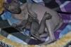 Котятки Донского сфинкса маленькая