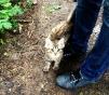 Котёнок ищет дом маленькая