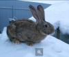 Кролики маленькая