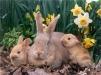 Кролики недорого маленькая