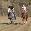 Лошади.Обучение верховой езде.Фотосессии маленькая