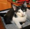 Маленький котик ищет свой дом маленькая
