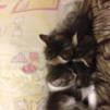 Милые котятки маленькая