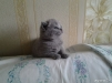 Милые котятки ждут своих хозяев маленькая