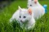 Очаровательные котятки в добрые, разумные руки маленькая