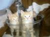 Отдадим котят в хорошие руки маленькая