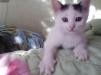 Отдам кота в хорошие руки бесплатно маленькая