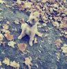 Отдам красивую собаку маленькая
