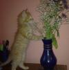 Отдам рыжего котенка в добрые и заботливые руки маленькая
