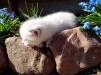 Отдам в дар котенка маленькая