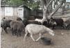Овцы маленькая