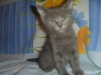 Подарю котят маленькая