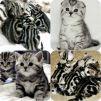 Потрясающие британские котята маленькая