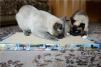 Продам  когтеточки-лежанки для кошек маленькая