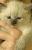 Продам котенка маленькая