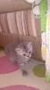 Продам котят маленькая