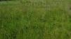Продам участок земли в Палласовском районе маленькая