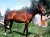 Продаю лошадь маленькая