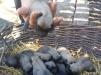 Продаю щенков бельгийской овчарки(малинуа) маленькая
