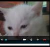 Продаются котята маленькая