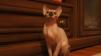 Продаются котята Канадского сфинкса маленькая