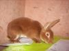 Продажа кроликов маленькая