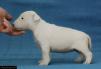 Щенки белого окраса минибуля маленькая