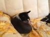 Собачка ищет хозяина маленькая