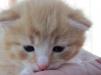Соолнечный кот ищет дом маленькая