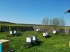 Срочно продаю пасеку 20 пчелосемей маленькая
