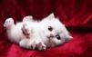 Присмотрю за котенком маленькая