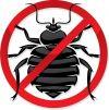 Уничтожение насекомых и грызунов в Тагиле и обл маленькая