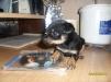 Замечательный и верный друг - щенок маленькая