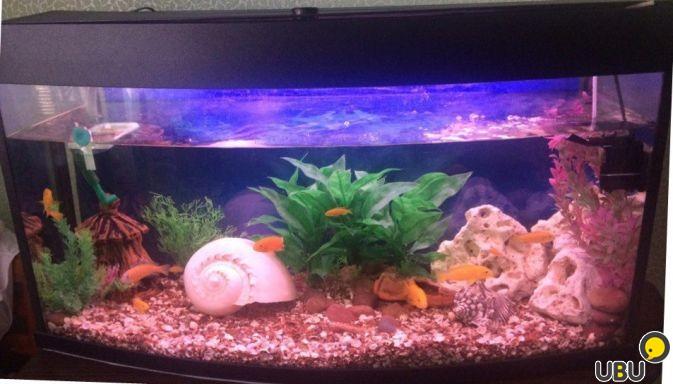 Как сделать аквариум на 150 литров
