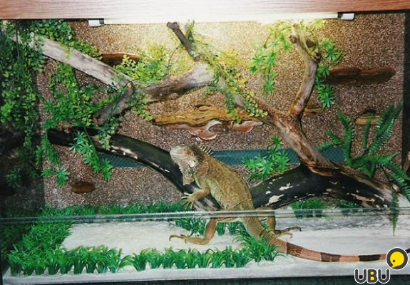 Как сделать террариум своими руками для ящерицы
