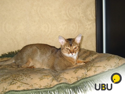 Передержка кошек в домашних условиях - TurnPike