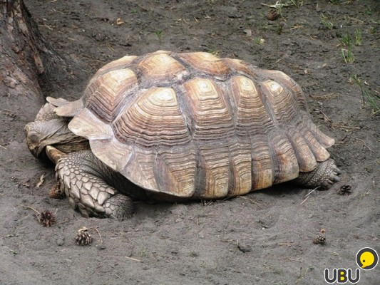 Авито спб рептилии