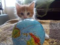 Обьявление Бесплатно отдам котенка в добрые руки