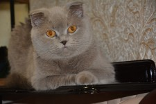 Обьявление кошки
