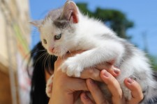 Обьявление Очаровательные котята в добрые руки!